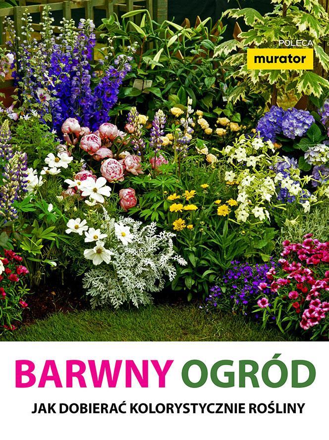 Barwny ogród. Jak dobierać kolorystycznie rośliny
