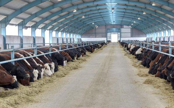Termoizolacje w budownictwie rolniczym. Wymagania, materiały termoizolacyjne