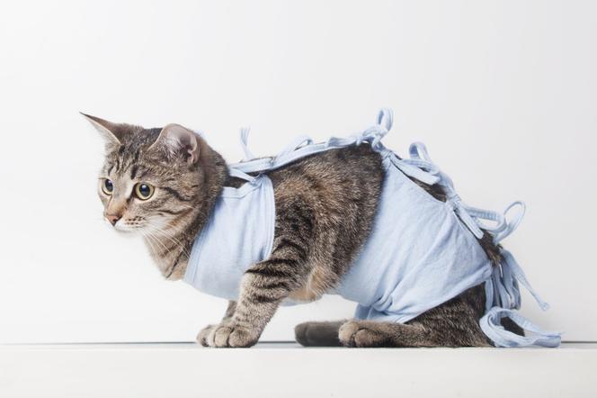 Kiedy kastracja kota? Przygotowanie i przebieg zabiegu